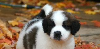 Puppy Handling