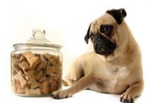 Dog Behavior Problems - What Are They?