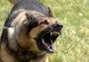 Aggressive Dogs - Part 1