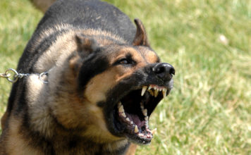 Aggressive Dogs - Part 1