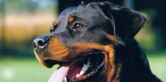 Aggressive Dogs - Part 2